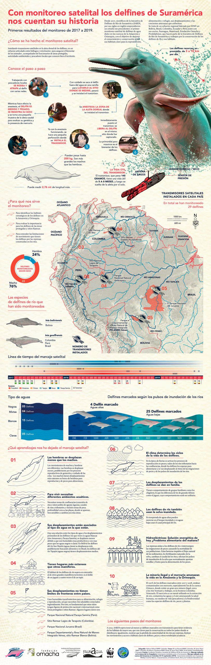 infografia-sobre-monitoreo-de-delfines